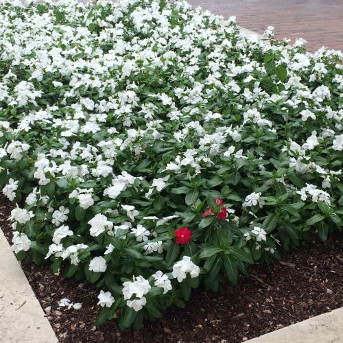 SMU-flowers-IMG_5135